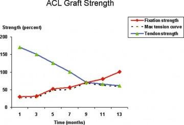 ACL graft strength